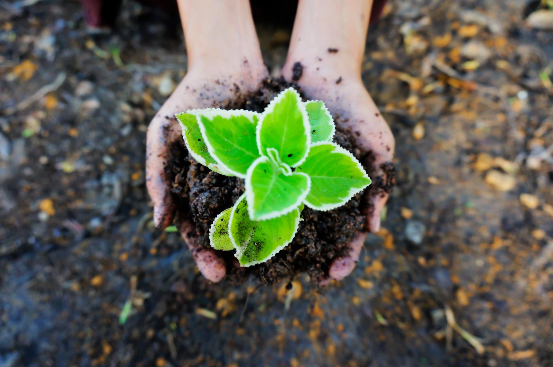 seedling-1558599_1920
